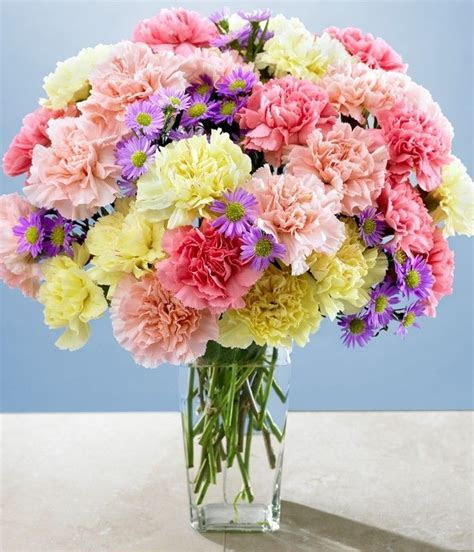 120 best images about Carnations on Pinterest   Bride