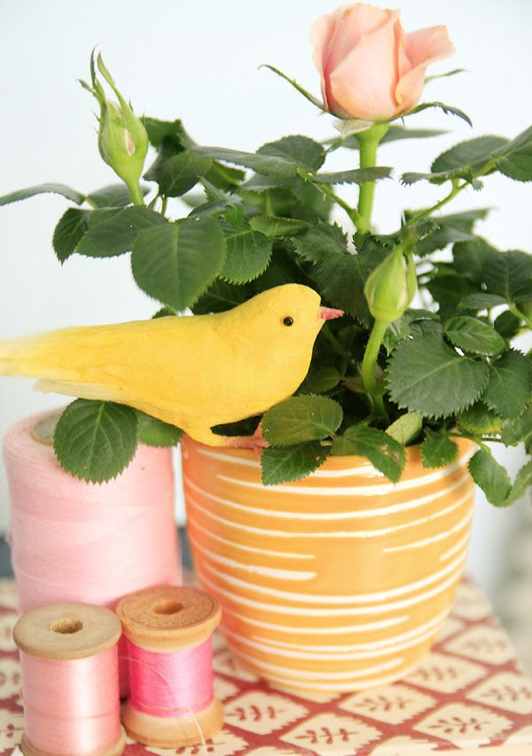 birdie corner