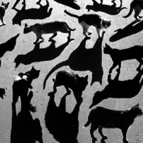 тени отбрасывают котов by Алексей Бедный (Alexey_Bednij) on 500px.com