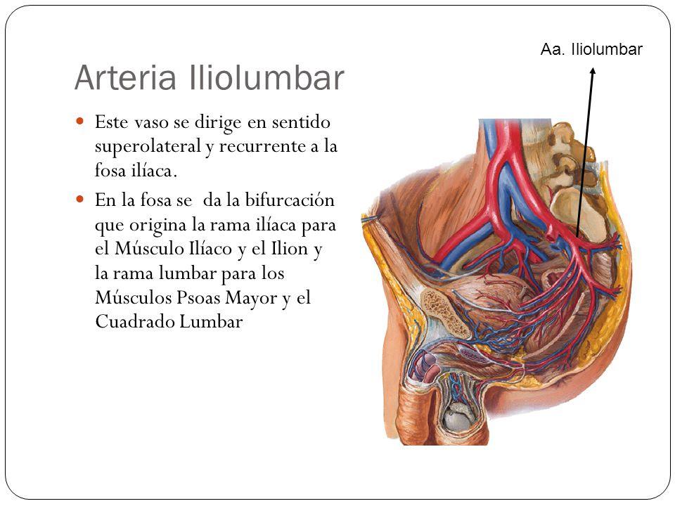 AMIGOS PARA SIEMPRE: Anatomía humana - Arterias