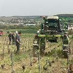 Les vignerons sont invités à trouver des alternatives aux herbicides via le travail du sol