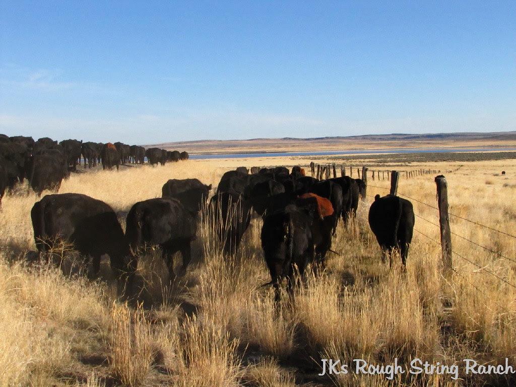 Trailin' the Cows Toward Dry Lake
