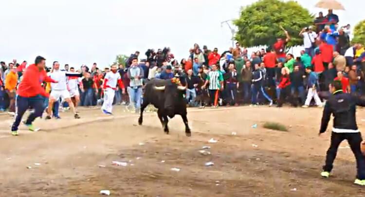 Toro de la Vega still