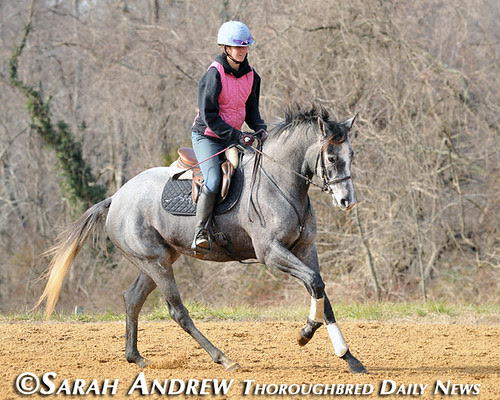 Gunport: Retired Racehorse Training Project