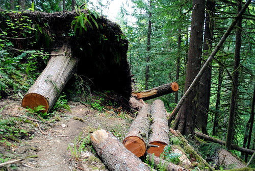 When a tree falls and blocks the trail, you have to improvise - at the Hunchback Mountain trail - Mt. Hood National Forest