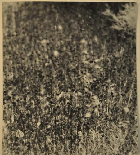 Black-Eyed Susan, Wildflowers #2, Centennial Lake, Ellicott City, Maryland by deneebarr