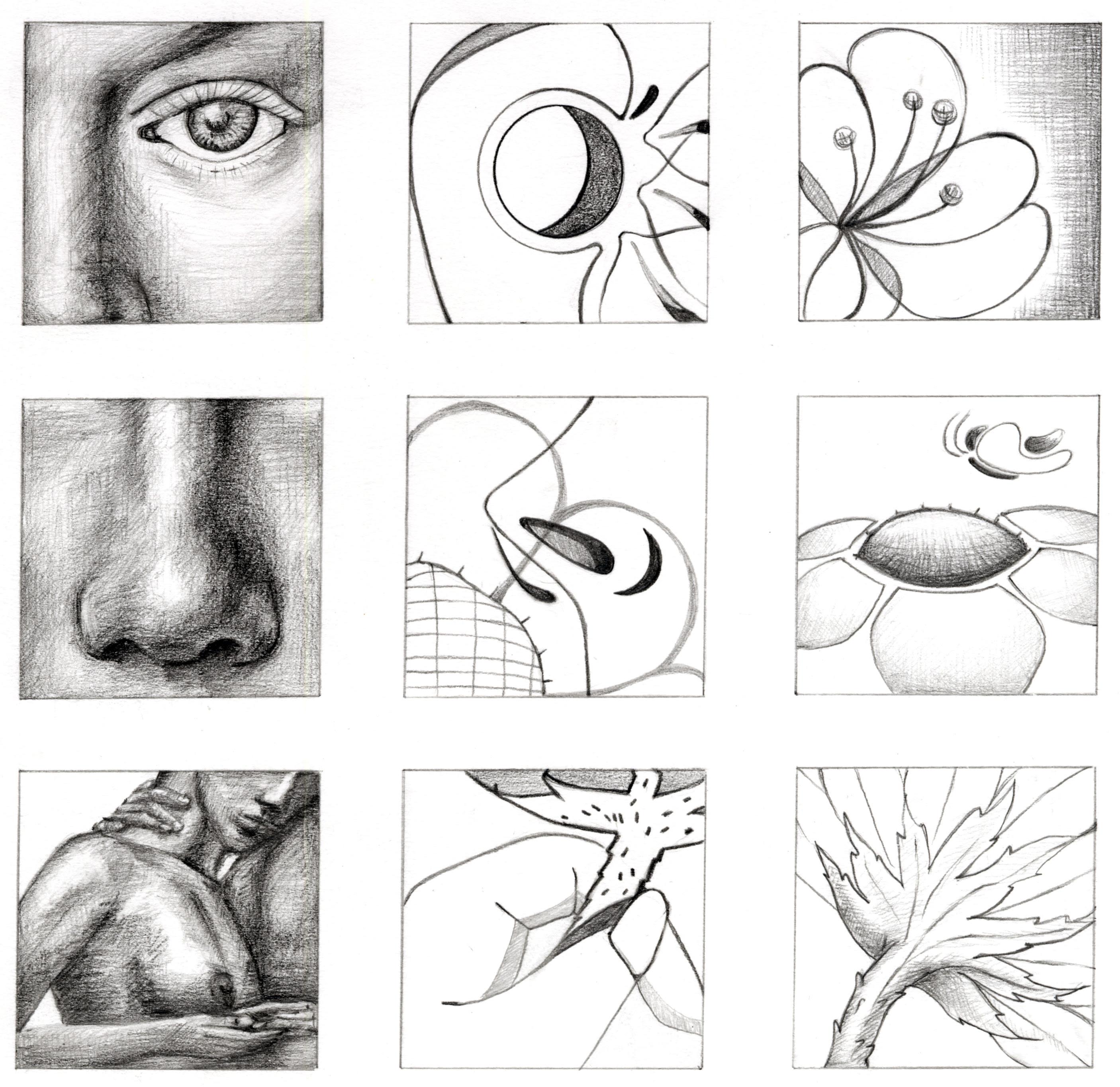 Basic Drawing Exercises