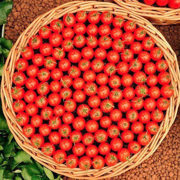 3. Эта корзина сочных помидоров вещи, идеально, перфекционист