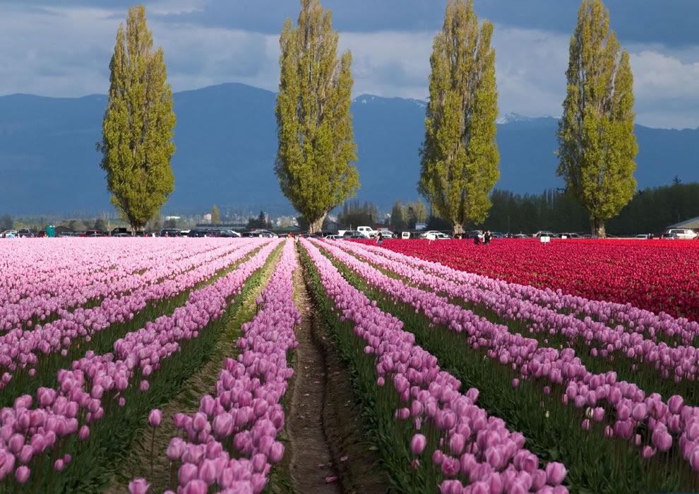 Tulip τοπίο με την αντίθεση των νεφών που έρχονται σε όλο το πεδίο
