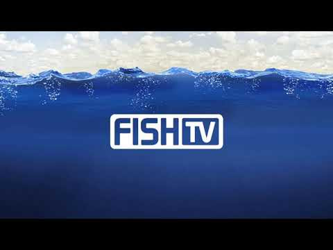 FishTV Ao Vivo
