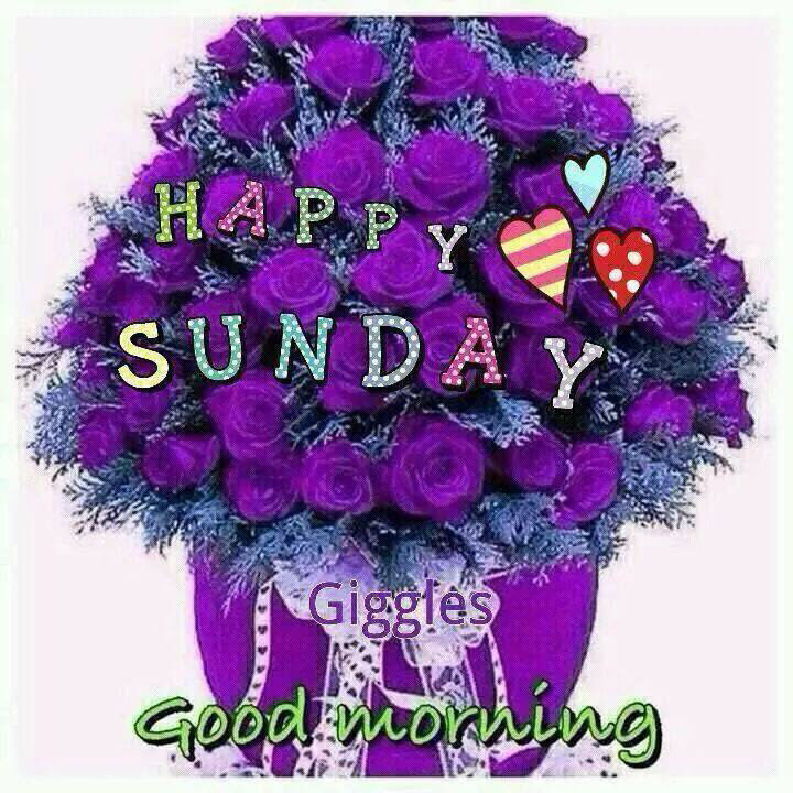 Happy Sunday Good Morning Purple Roses Pictures Photos And Images