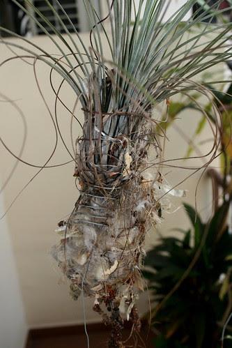 Sunbird5 - Nest