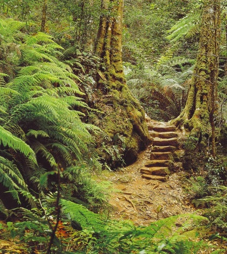 Greater Blue Mountains World Heritage Area rainforest of the Jamison Valley - Sydney NSW, Australia