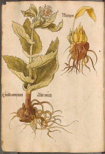 Arzneipflanzenbuch, 1525 d