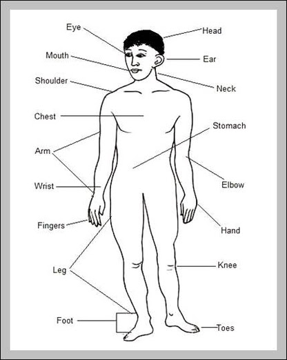 Label Body Parts Anatomy System Human Body Anatomy Diagram And Chart Images