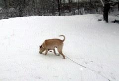 Zeus_snow_30909b