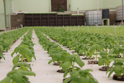 Our commercial aquaponics class is ideal for the aspiring urban farmer