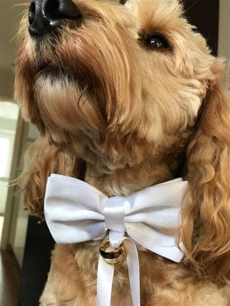 Dog Ring Bearer Red Bow Tie and Collar, Wedding Dog Collar