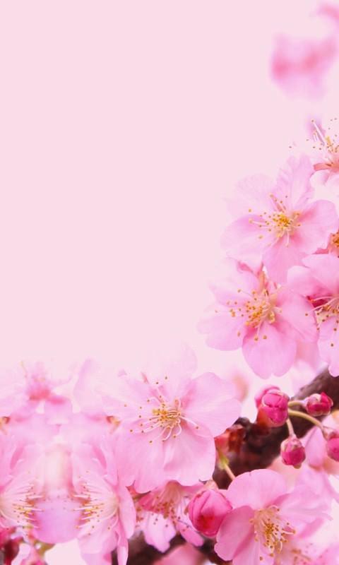 春 かわいいの画像集21343点 [1] 完全無料画像検索のプリ画像! - 春 かわいい 壁紙