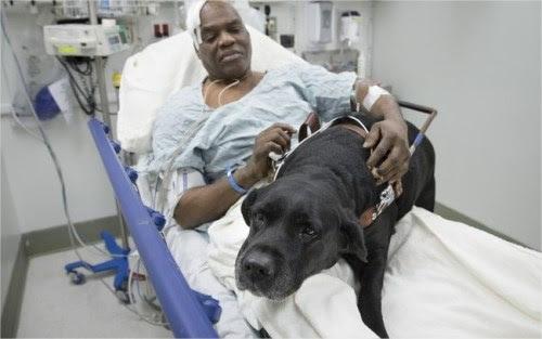 Cecil Williams que é cego, passou mal no metrô de Nova York e foi protegido pelo seu cão-guia Orlando
