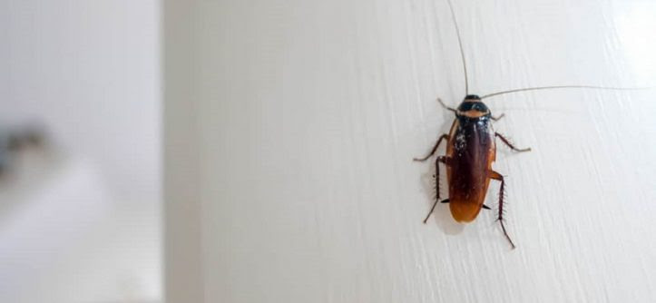 How To Get Rid Of Cockroaches In Kitchen Cabinets First Grade Appliances