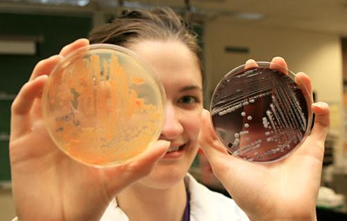 Cultivos de bacterias