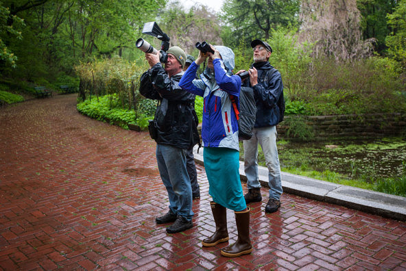 Bird-watchers, like these in Brooklyn's Prospect Park, will compete on Saturday in the World Series of Birding in New Jersey.