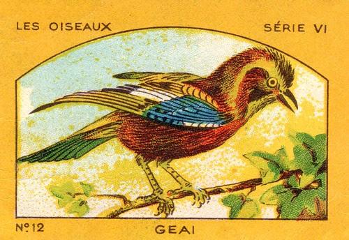 milliat oiseaux010