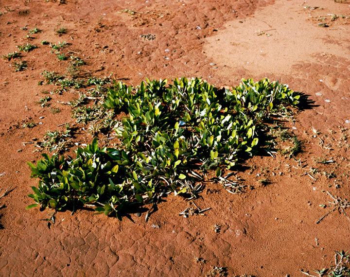 organisme vivant plus vieux planete 03 Les organismes vivants les plus vieux du monde  technologie photo photographie bonus art