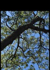 Tree Services NJ | Tree Removal Service NJ | Tree Service NJ - Image 1