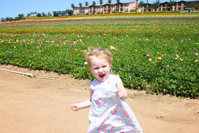 Carlsbad Flower Fields April 2012 33