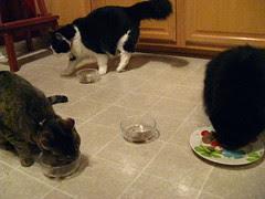 """Sharing Jasper's birthday """"cake"""""""