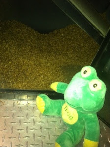 Frog Q with chaff from day