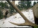Elk Frame