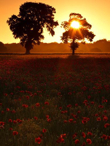 Sunrise by Phil Carpenter