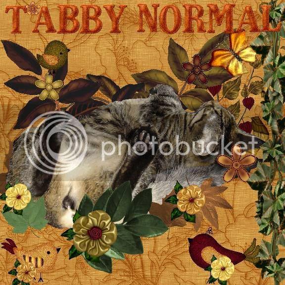 Autumn,tabby cat