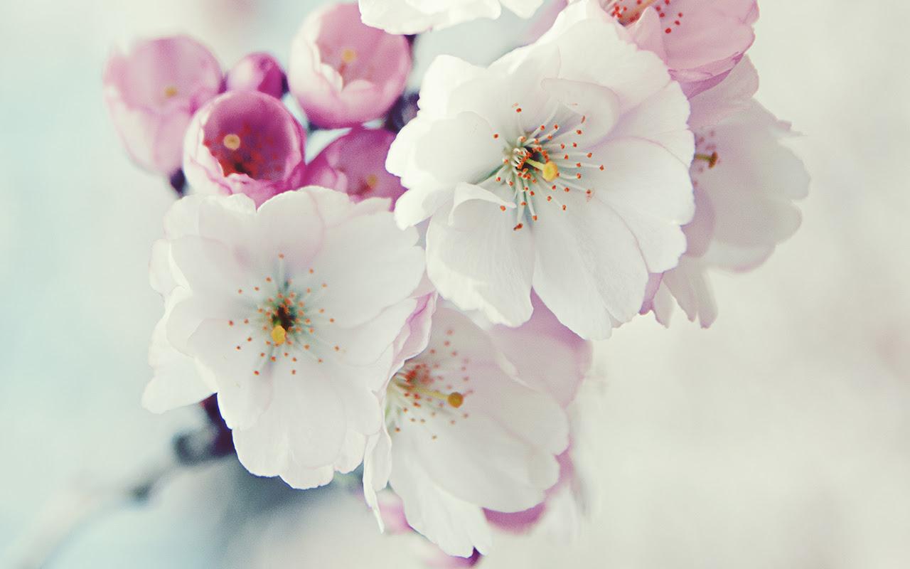 60 Beautiful Flowers Wallpapers [Wallpaper Wednesday]  pixelpush design