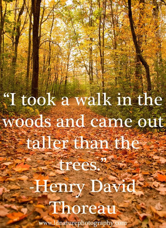 Henry David Thoreau Quotes Nature Is Full Of Genius Henry David