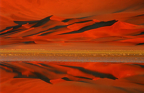 Desert Reflections