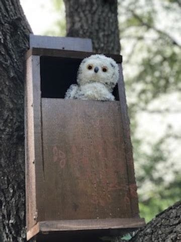 Owl House   Austin Craft Lounge