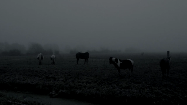 The Ethereal Melancholy of Seeing Horses in the Cold photo 382a6f81-f676-41b0-ab0a-f9567e2d11d7_zpssfwbgnhr.png