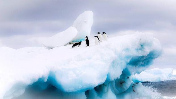 Satélites y modelos oceánicos ayudan a predecir cómo será la biodiversidad en la Antártida