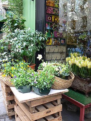 fleurs dans la rue du Roi de Sicile.jpg