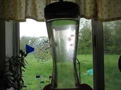 moldy hummer feeder