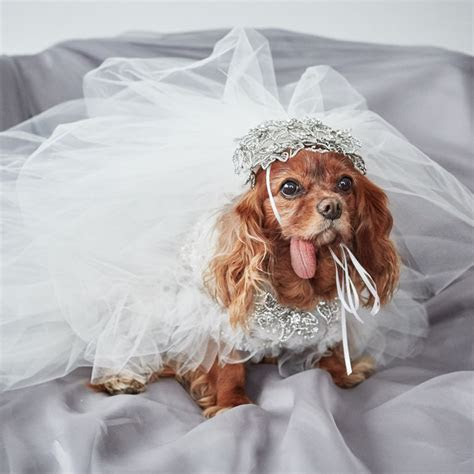 EXCLUSIVE: Get a First Look at Toast the Dog's Marchesa