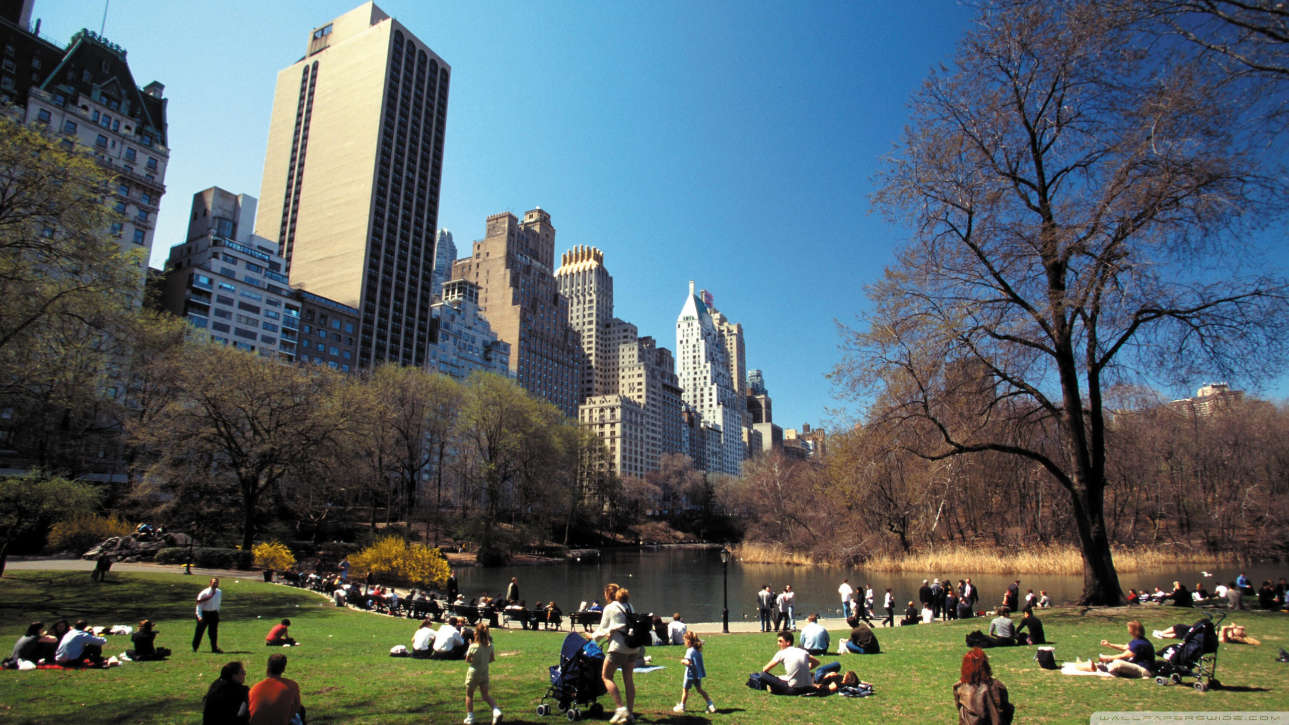 Central Park Wallpaper 2560x1440 77627