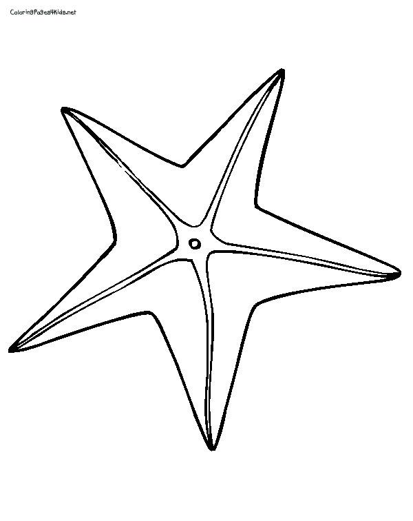 starfish coloring page starfish112