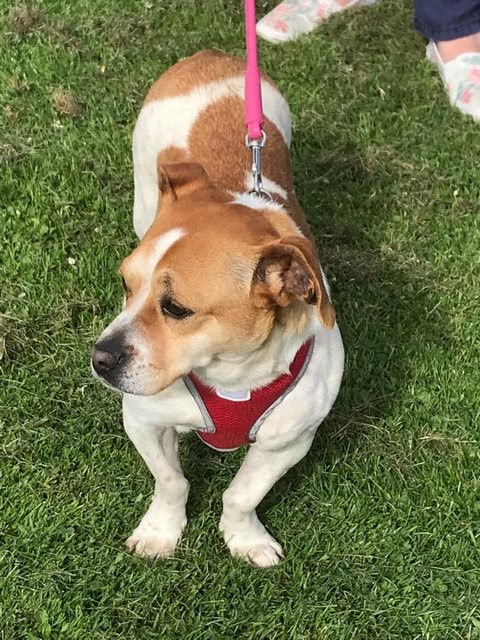 Talisha – 2 year old female Cross-Breed