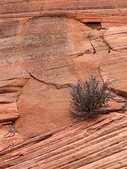 Rock Patterns and Shrub