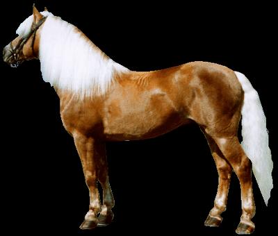 Atlar Ve çeşitleri Mehmet Hekim